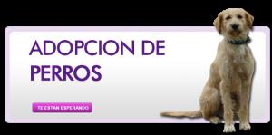ingreso-perros