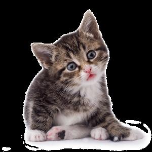 sircan-gatito